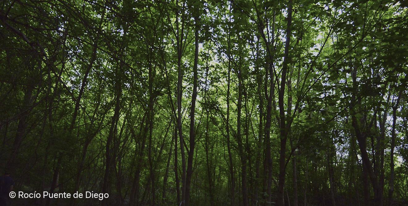 El derecho que nos involucra a todas y todos: El medio ambiente